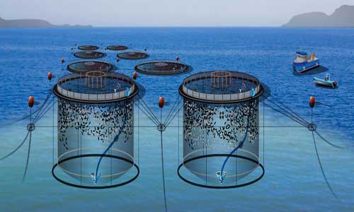 قیمت فروش قفس پرورش ماهی