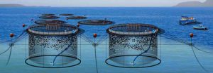 قفس پرورش ماهی