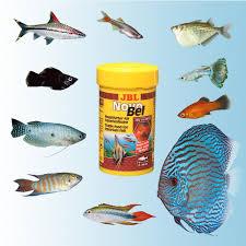 نرخ روز غذای ماهی